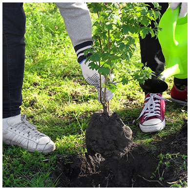 Two sets of feet while planting a tree